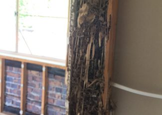 termite-treatments