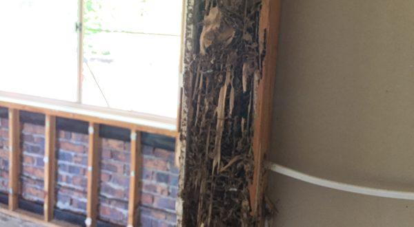 termite-treatments